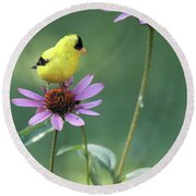 Goldfinch On A Coneflower Round Beach Towel