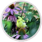 Goldfinch On Coneflowers Round Beach Towel