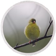 Round Beach Towel featuring the photograph Goldfinch Puffball by Susan Capuano
