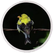 Goldfinch Round Beach Towel by Ronda Ryan