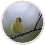 Round Beach Towel featuring the photograph Goldfinch Song by Susan Capuano