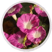 Round Beach Towel featuring the photograph Good Morning, Glory by Sheila Brown