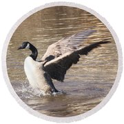 Goose Flapping Wings Round Beach Towel by Wendy Coulson