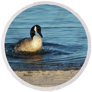 Goose In The Chesapeake Bay Round Beach Towel