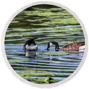 Goose Tipping Round Beach Towel by Ray Congrove