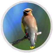 Round Beach Towel featuring the photograph Gorgeous Cedar Waxwing by Rodney Campbell