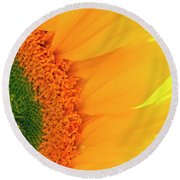 Gorgeous Sunflower Macro Round Beach Towel