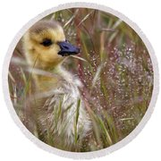 Gosling In The Meadow Round Beach Towel