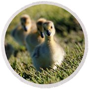 Gosling March Round Beach Towel