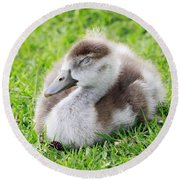 Gosling Napping  Round Beach Towel