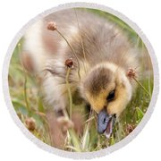 Gosling Nibble Round Beach Towel