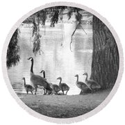 Goslings Bw7 Round Beach Towel by Clarice Lakota