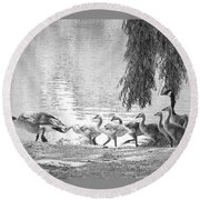 Goslings Bw8 Round Beach Towel by Clarice Lakota