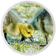 Round Beach Towel featuring the photograph Goslings Snacking by Steven Santamour