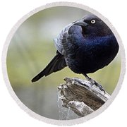 Grackle Resting Round Beach Towel