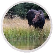 Grand Teton Moose Round Beach Towel