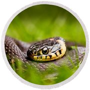 Grass Snake - Natrix Natrix Round Beach Towel