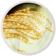 Grasses Of Gold Round Beach Towel