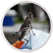 Dancing Grasshopper At The Pool Round Beach Towel by Belinda Lee