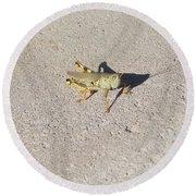 Grasshopper Curiosity Round Beach Towel