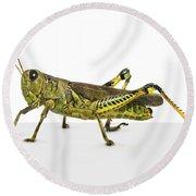Grasshopper Round Beach Towel