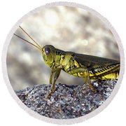 Grasshopper Round Beach Towel by Joseph Skompski