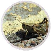 Grasshopper Laying Eggs Round Beach Towel