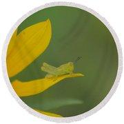 Grasshopper On A Flower Petal Round Beach Towel
