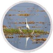Grat Egret - India Round Beach Towel