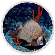 Round Beach Towel featuring the photograph Gray Angel Fish And Sponge by Amy McDaniel