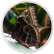 Gray Cracker Butterfly Round Beach Towel by Betty Buller Whitehead