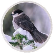 Gray Jay Round Beach Towel
