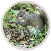 Gray Squirrel Eating Round Beach Towel