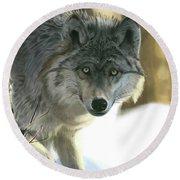 Gray Wolf Round Beach Towel