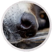 Round Beach Towel featuring the photograph Gray Wolf Nose by Teri Virbickis