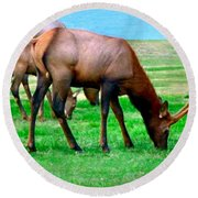 Grazing Elk Round Beach Towel by Sadie Reneau