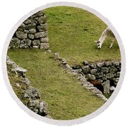 Grazing In Machu Picchu Round Beach Towel