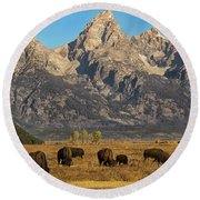 Grazing Under The Tetons Wildlife Art By Kaylyn Franks Round Beach Towel