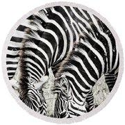 Grazing Zebras Close Up Round Beach Towel by Darcy Michaelchuk