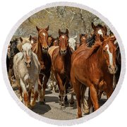 Round Beach Towel featuring the photograph Great American Horse Drive by Brenda Jacobs