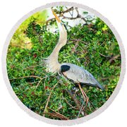 Great Blue Heron At Rookery Round Beach Towel