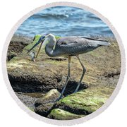 Great Blue Heron Catching A Blue Crab On Chesapeake Bay Round Beach Towel