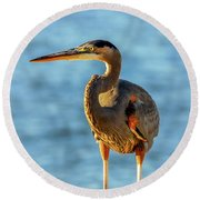 Great Blue Heron Closeup Round Beach Towel