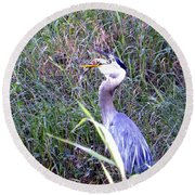 Round Beach Towel featuring the photograph Great Blue Heron Eating A Fish by Chris Mercer