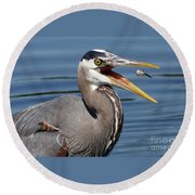 Great Blue Heron Feast Round Beach Towel