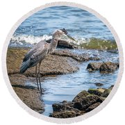 Great Blue Heron Fishing On The Chesapeake Bay Round Beach Towel