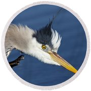 Great Blue Heron - Good Scratch Round Beach Towel