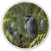 Great Blue Heron In A Willow Tree Round Beach Towel