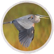 Great Blue Heron In Flight Round Beach Towel