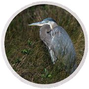 Great Blue Heron In The Grass Round Beach Towel